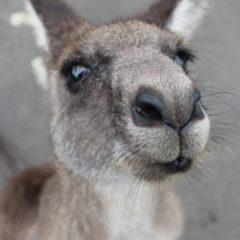 Szok! czyli odkrywanie Australii